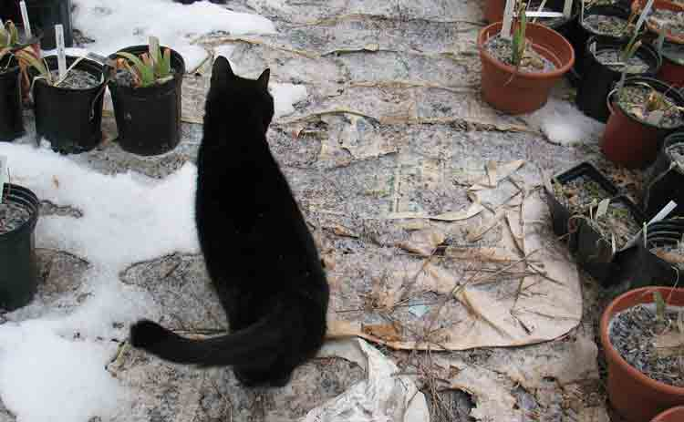 leftover-cat-inspects-iris.jpg