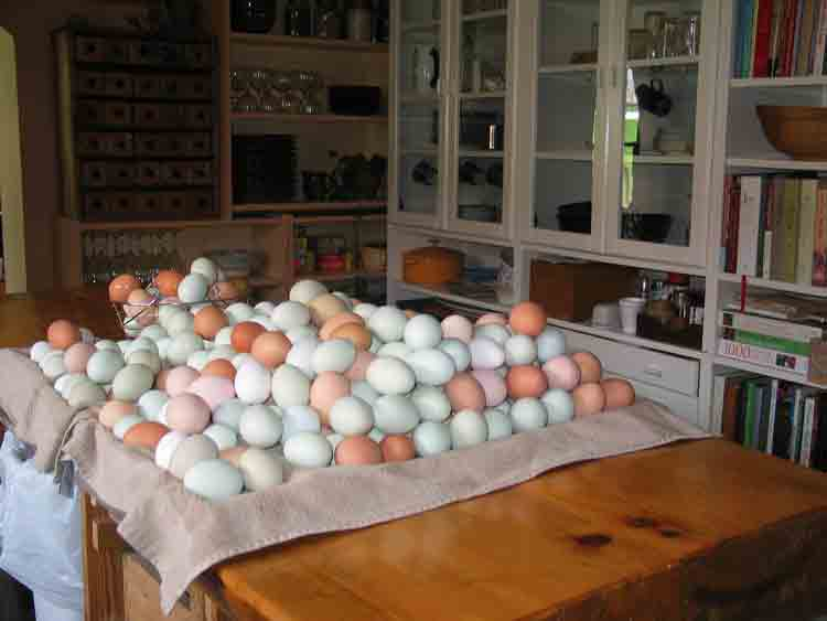 eggs-ready-for-packing-apr.jpg