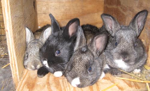 four-bunnies.jpg