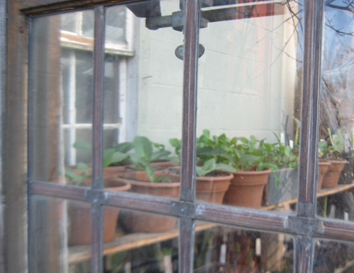 through-greenhous-window.jpg