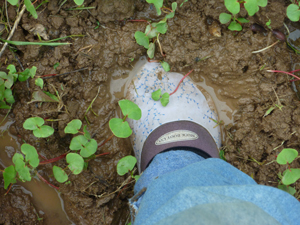 muck-boots-in-mud.jpg